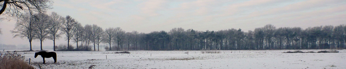 header-wsvgg-1-winter.jpg