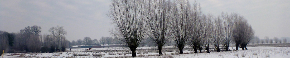 header-wsvgg-2-winter.jpg